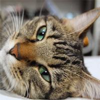 cat0404s