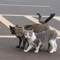 cat0410s