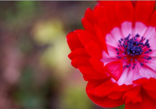 アネモネという名の異世界 Photo by titanium22 from Flickr