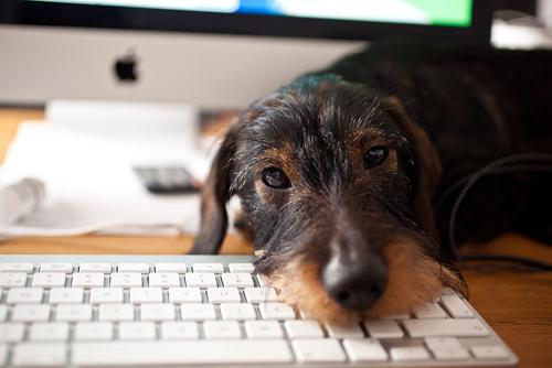 10年経つと犬は転生するそうです。/Photo by Håkan Dahlström from Flickr