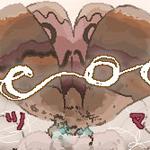cocoontops
