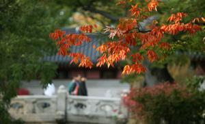 Seoul106
