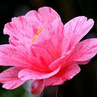 flower1226s
