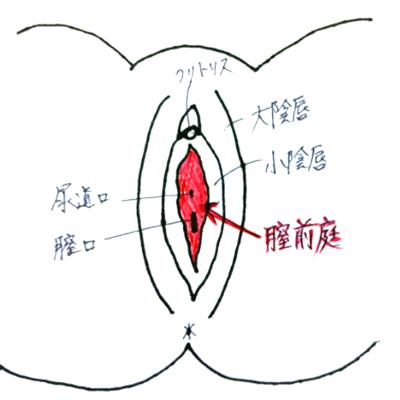 【完成】挿入時にヒリヒリ痛い! 婦人科はしごでやっと気付いた、「膣前庭」の炎症の画像2