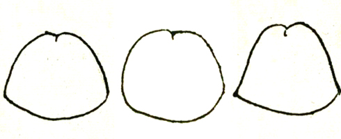 左:ベル型 中:弾丸型 右:三角形