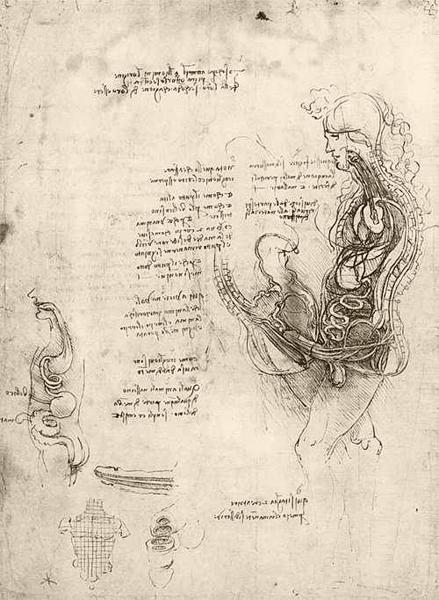 Leonardo da Vinci - Anatomical drawings - Copulation