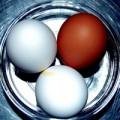 eggs0902s