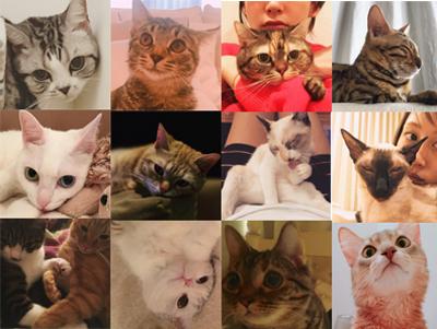 ダレノガレ明美も指原莉乃も中山美穂も。自撮りより高需要かつ好反応の「愛猫」インスタ!!の画像1