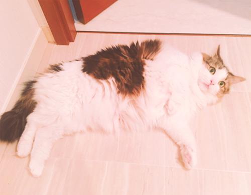 ダレノガレ明美も指原莉乃も中山美穂も。自撮りより高需要かつ好反応の「愛猫」インスタ!!の画像11