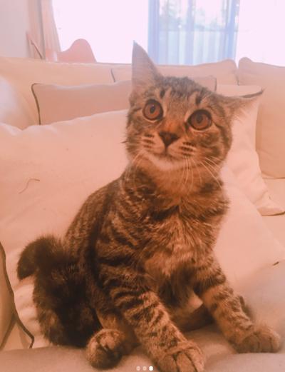 ダレノガレ明美も指原莉乃も中山美穂も。自撮りより高需要かつ好反応の「愛猫」インスタ!!の画像13