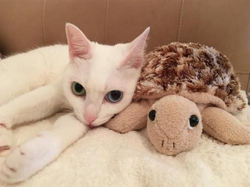 ダレノガレ明美も指原莉乃も中山美穂も。自撮りより高需要かつ好反応の「愛猫」インスタ!!の画像5
