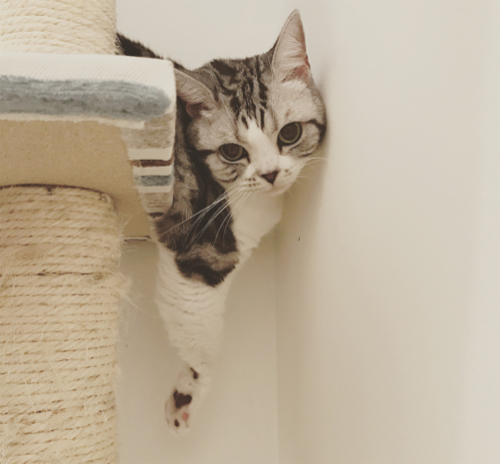 ダレノガレ明美も指原莉乃も中山美穂も。自撮りより高需要かつ好反応の「愛猫」インスタ!!の画像8