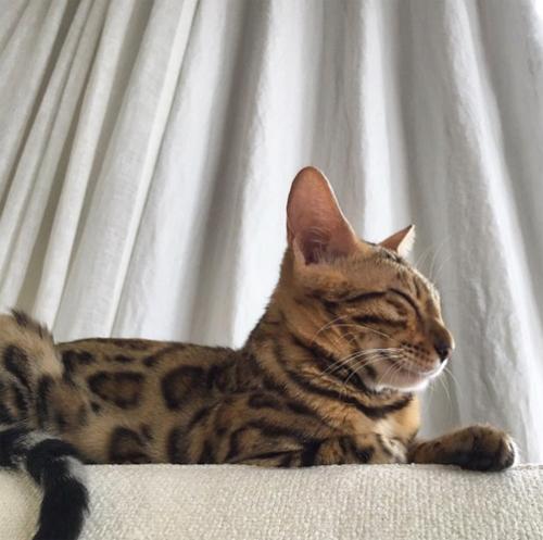 ダレノガレ明美も指原莉乃も中山美穂も。自撮りより高需要かつ好反応の「愛猫」インスタ!!の画像2