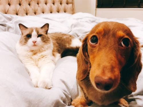 ダレノガレ明美も指原莉乃も中山美穂も。自撮りより高需要かつ好反応の「愛猫」インスタ!!の画像3