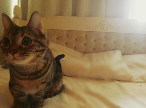 ダレノガレ明美も指原莉乃も中山美穂も。自撮りより高需要かつ好反応の「愛猫」インスタ!!の画像6