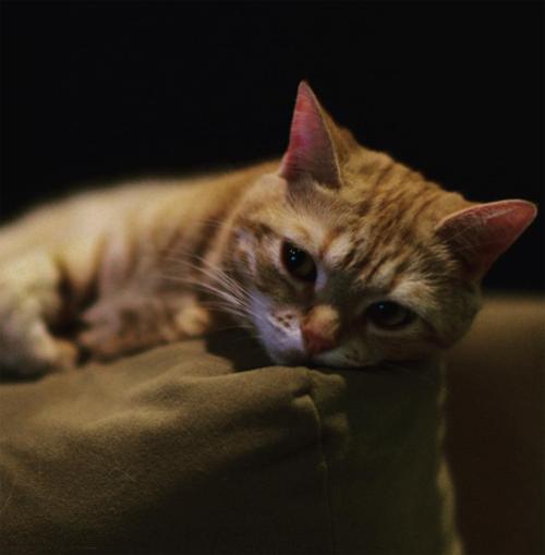 ダレノガレ明美も指原莉乃も中山美穂も。自撮りより高需要かつ好反応の「愛猫」インスタ!!の画像14