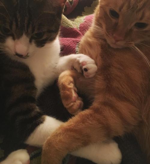 ダレノガレ明美も指原莉乃も中山美穂も。自撮りより高需要かつ好反応の「愛猫」インスタ!!の画像10
