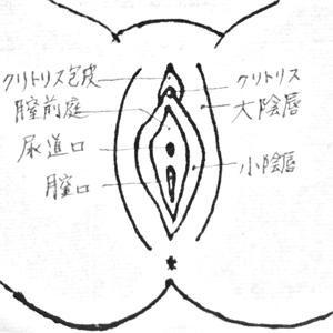 M字開脚した状態で、まんこを正面から見た図